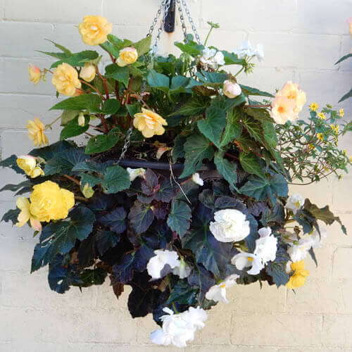 results achievable with the plantopia easy fill hanging basket